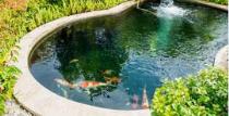 Vijver - Zwembad