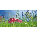 Bloemenmengsel Buitengebied 1 kg