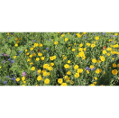 Bloemenmengsel Fleurige braak 1 kg