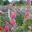 Bloemenmengsel Veldbloemen - 250 gr
