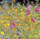 Bloemenmengsel voor bijen en Co - 250 gr