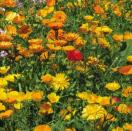 Bloemenmengsel Rustiek - 250 gr