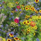 Bloemenmengsel Meerjarige Nectar bloemen - 250 gr