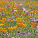 Bloemenmengsel Lente Bloemen - 250 gr