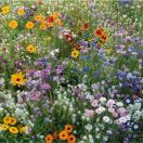 Bloemenmengsel Korte Veldbloemen - 250 gr