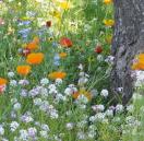 Bloemenmengsel Allround bloemen - 250 gr