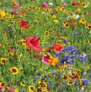 Bloemenmengsel Summer Multicolour - 250 gr