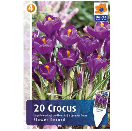 Bloembollen Crocus Flower Record