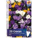 Bloembollen Crocus Largeflowering Mix