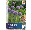 Bloembollen Allium Gladiator