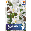 Bloembollen Chionodoxa Luciliae Alba