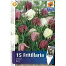 Bloembollen Fritillaria Meleagris