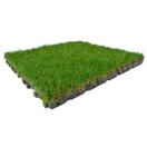 Grasdallen ingezaaid 100x100x4,5 cm dik