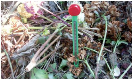 Nature Compost thermometer