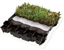 Sedum-eccotray (0.22 m² - 4.4 stuks nodig per m²)