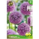 Bloembollen Allium Mars