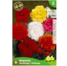 Bloembollen Begonia dubbele mix