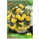 Bloembollen Begonia Pendula geel