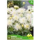 Bloembollen Dahlia Border Cactus Wit (A)